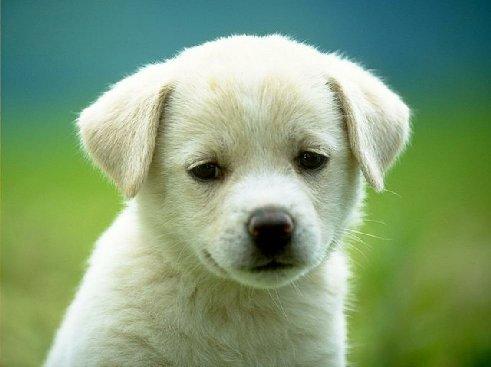 cutest_puppy.jpg