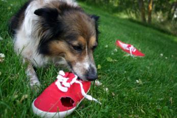 dog_shoe.jpg