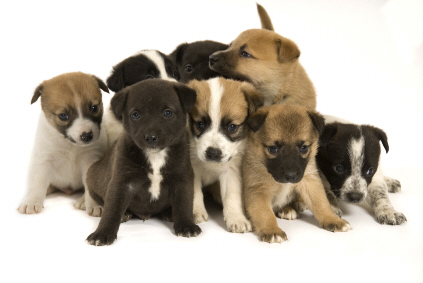 puppies_pile_up_small.jpg